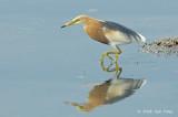 Heron, Javan Pond @ Lor Halus