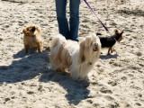3 at the beach