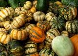 Gourd World