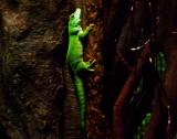 Bronx Zoo lizard.jpg