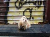 Yuji, Dog of the City