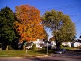 Autumn in North Merrick.jpg
