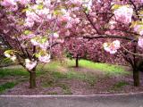Brooklyn Botanic.jpg