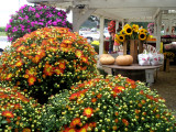 Fruit stand near Riverhead.jpg