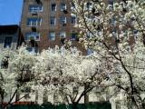 Spring in Midtown.jpg