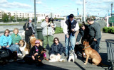 Cruisin Canines in Freeport