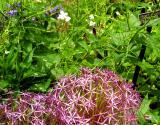 Old Westbury flowers