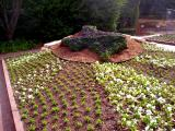 Texas flowers at the Botanical garden