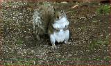 Bewildered squirrel