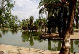 Duck island at Phoenix Encanto Park
