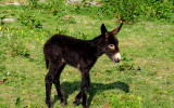 Baby donkey's first day on Earth
