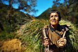 hay lady 2