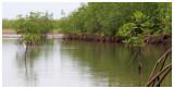 La mangrove de la Somone
