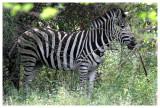 La reserve de Bandia