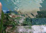 venezia-water.jpg