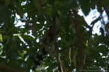 2007-08-08 Sao Pedro Bresil 27.jpg
