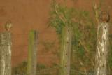 2007-08-09 Sao Pedro Bresil 49.jpg