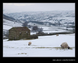Swaledale Barns #06, Yorkshire Dales