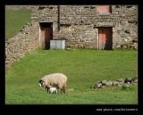 Keld Red Barn #05, Swaledale, North Yorkshire