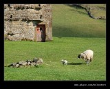 Keld Red Barn #07, Swaledale, North Yorkshire
