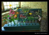 Flower Display, Snowshill Manor