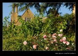 Roses of Old Garden #1, Hidcote Manor
