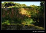 Sunlit Wall, Hidcote Manor