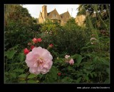 Roses of Old Garden #3, Hidcote Manor