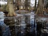 Dawes Arboretum  -  Heath, Ohio  3-5-09