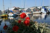 Harbor beauty