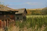 Old long ago abandoned farm site