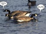 Bird Talk 3