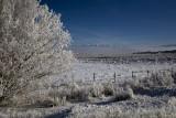Hoar Frost as Freezing Fog Retreats