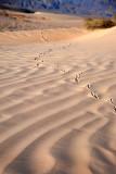 Someone's Been Running Around the Dunes