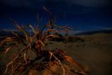 Strange Desert Beauty