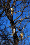 Look - There Be Owls!!!