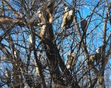 Owls!!! How Many Do You See?