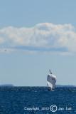 Sailing 100