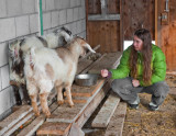 A girl and her goats