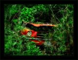 Jungle Mustang