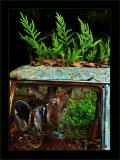 Jungle Car Window