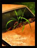 Hood Planter