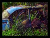 Jungle Sedan