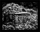 Jungle Ford Truck BW