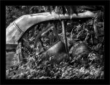 Jungle Sedan BW