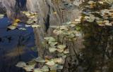 The Splendor of Yosemite