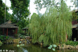 Qinghui Garden DSC_7811