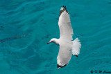 Gull (DSC_4244)