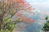 Shimen National Forest Park (石門國家森林公園)