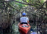 Norman enters the mangrove tunnel
